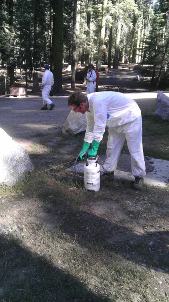 The California Department of Public Health discovered two dead squirrels that tested positive for the plague virus at Yosemite National Park.<br>Photo courtesy of California Department of Public Health