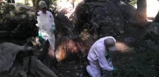 The California Department of Public Health discovered two dead squirrels that tested positive for the plague virus at Yosemite National Park.Photo courtesy of California Department of Public Health