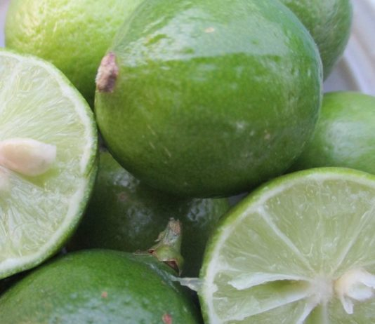 frost sensitive Mexican lime