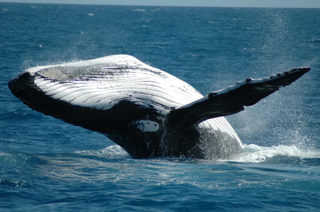 всегда все виды китообразных картинки платками запаслись, но