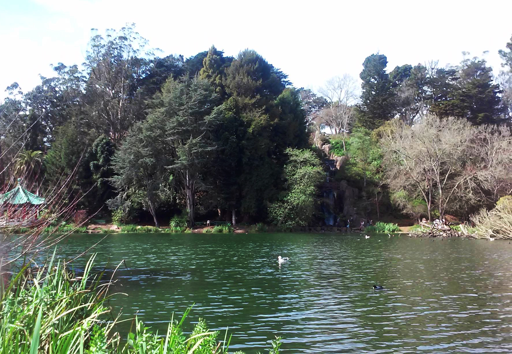 SAN FRANCISCO—The San Francisco Police Department announced that a body was discovered floating in a lake of Golden Gate Park on Wednesday, March 3.